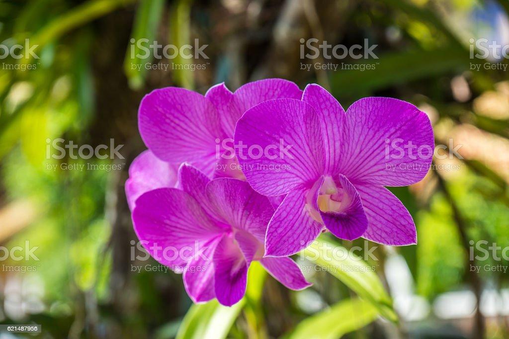 Orchidée fleur  photo libre de droits