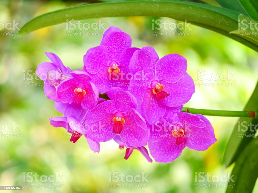 Orchid flower pink beautiful In nature stock photo