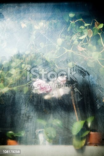 A beautiful orchid and other lush plants behind a dirty, foggy glass.