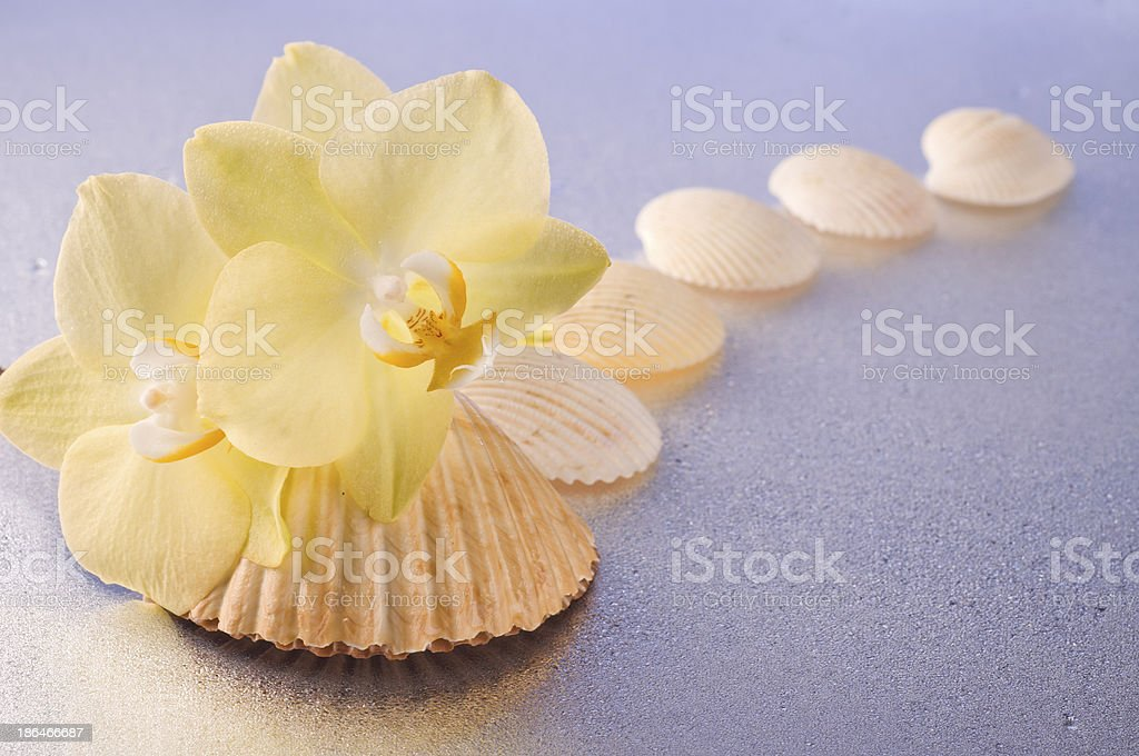 Orchid flowers and seashells royalty-free stock photo