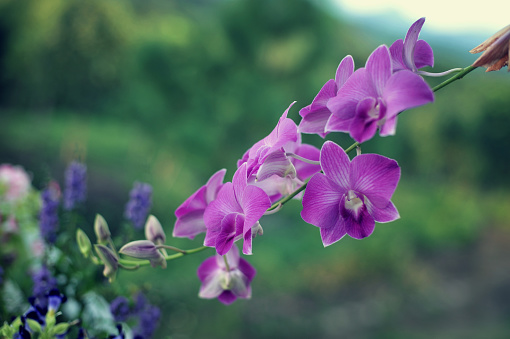 Orchid Flowers Beautiful Orchid Natural Flowers стоковые