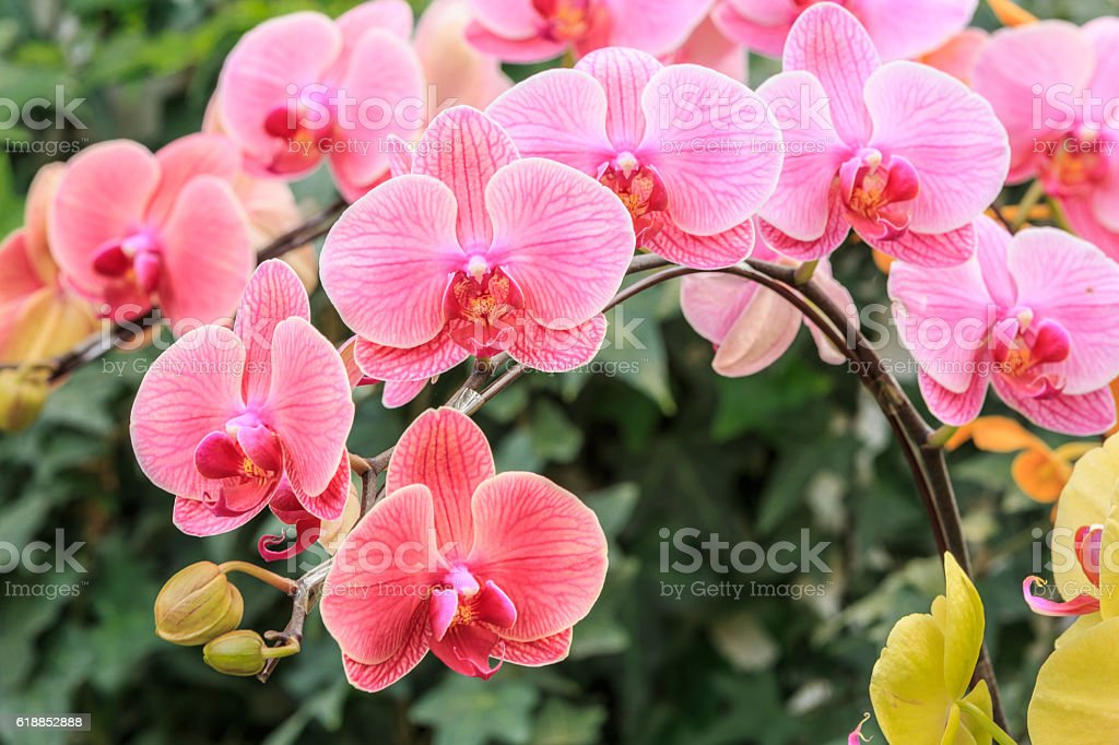 orchid flowers bloom in natural world stock photo