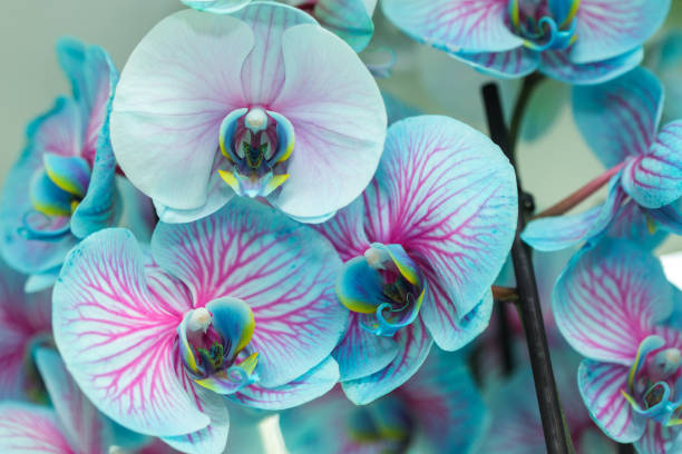 orchid blommor i trädgården - foderblad bildbanksfoton och bilder