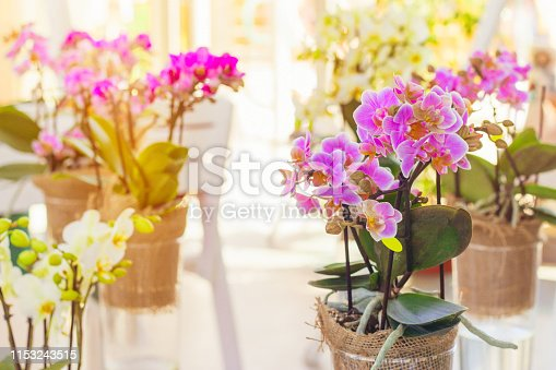 Orchid flowers in a sunlit room
