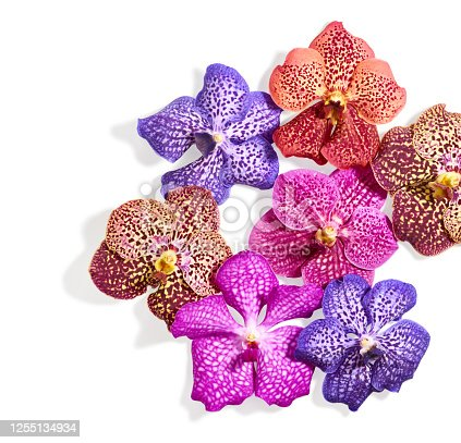Orchid flowers isolated on white background with place for text