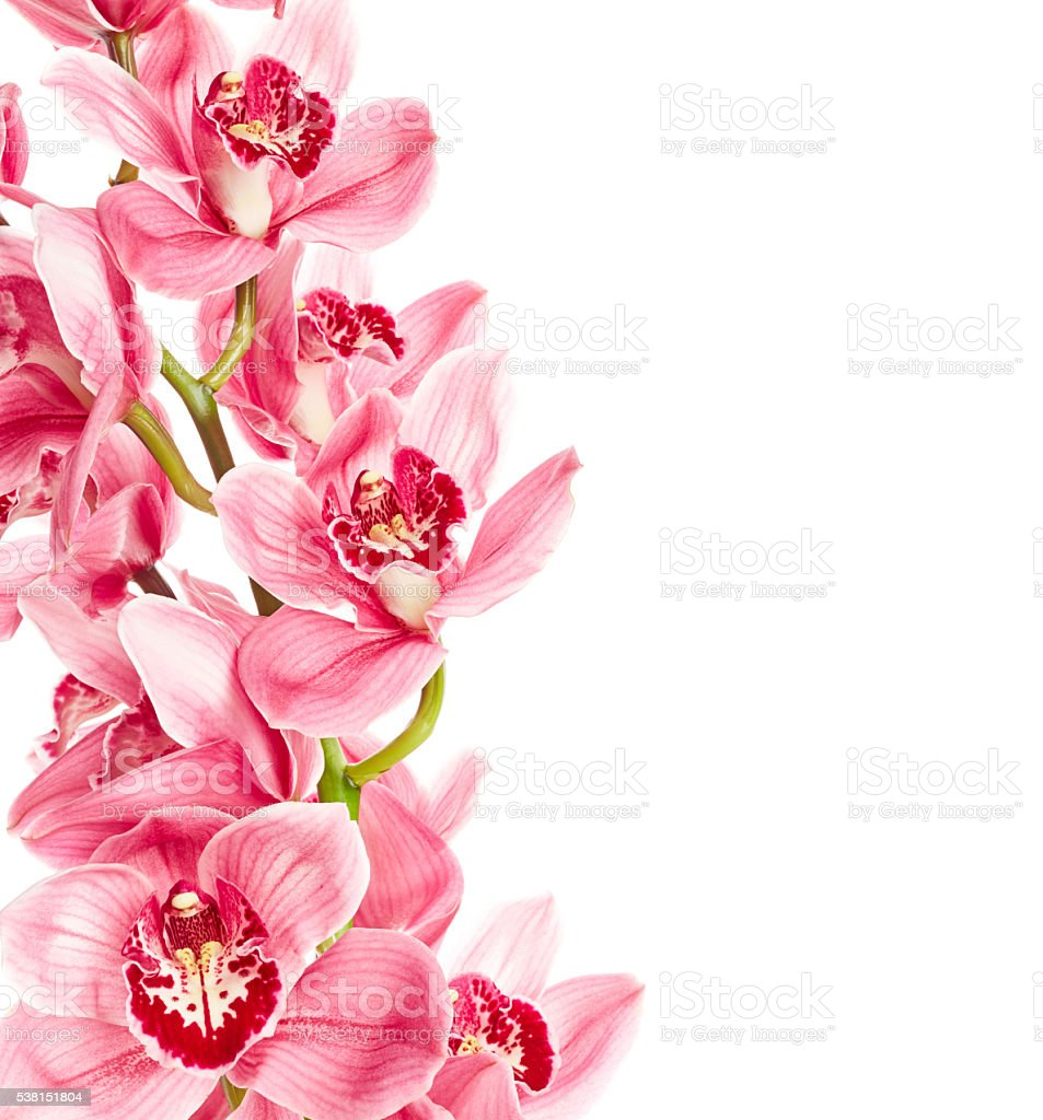 Orchid flowers stock photo