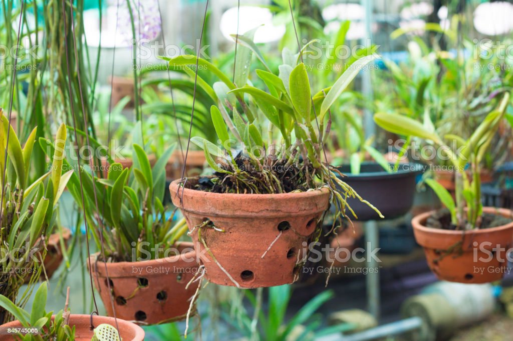 orchid flowers with leaves in flower garden stock photo