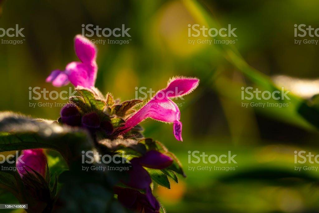 Orchid från sida bildbanksfoto