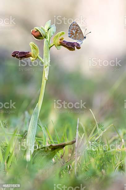 Orchid fusca and butterfly picture id468318928?b=1&k=6&m=468318928&s=612x612&h=zdg 1kj 5ozm4mrdlthmljlgyn42tdrhrzoje6vbcwq=
