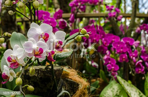 Orchid Garden in Singapore Botanical gardens. Singapore Botanical gardens is a world heritage site.