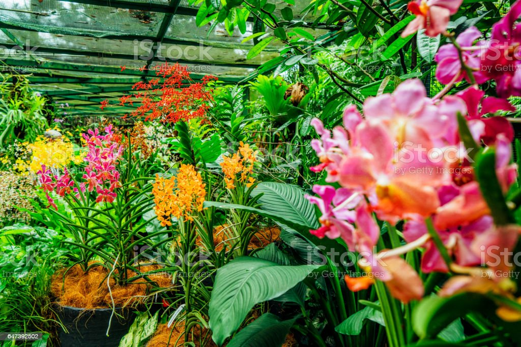 Orchid Garden stock photo
