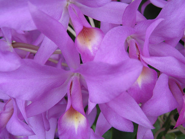 Orchid I stock photo