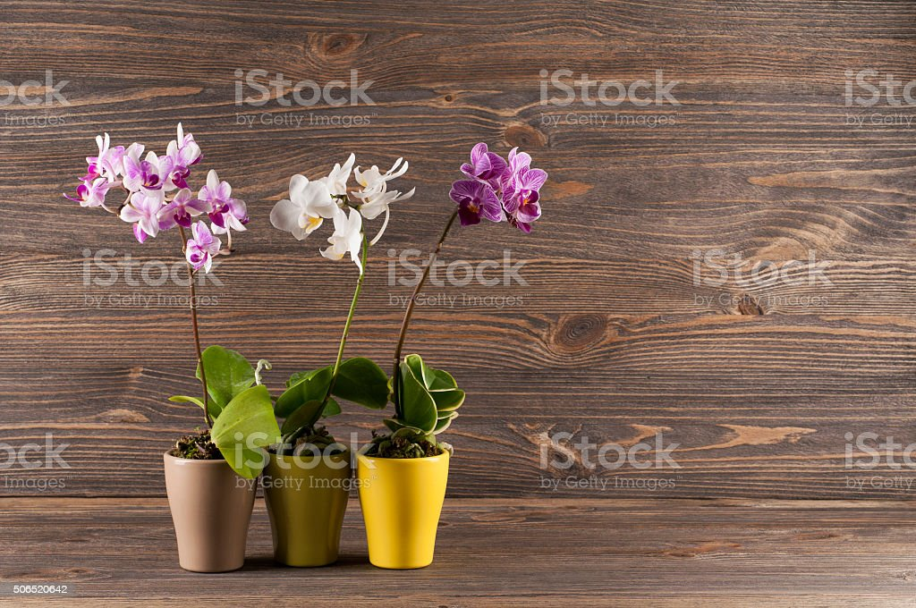 Orchid in clay pot over wooden background. stock photo