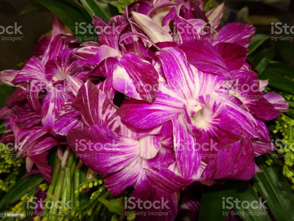 Orchidee in verschiedenen Farben und verschiedenen Sorten
