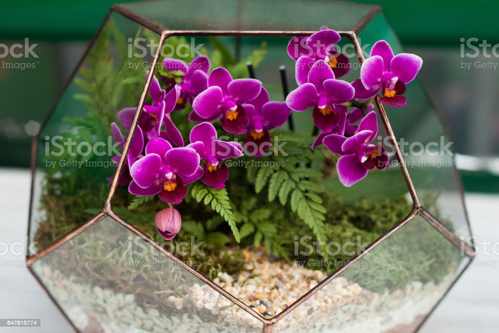 Orchid in the florarium stock photo