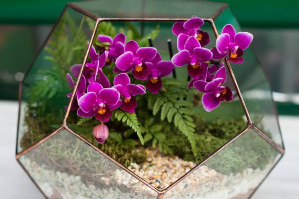 orchidee in der florarium - terrarienpflanzen stock-fotos und bilder