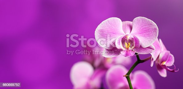 Beautiful orchid on a purple backgorund. Photo beautiful flower.