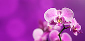 Beautiful orchid on a purple backgorund. Photo beautiful flower.\