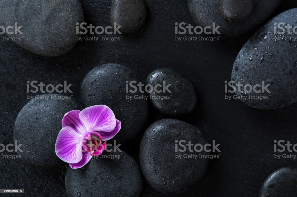 Orchid on black spa stones stock photo