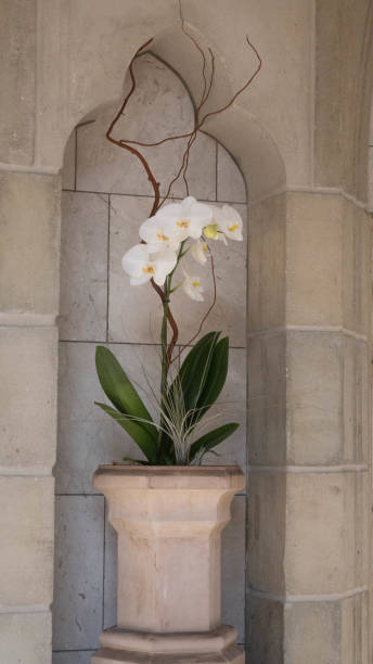 Orchid on Marble stock photo