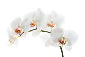 istock Orchid on White 168632092