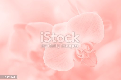 Orchid Pastel Living Coral Millennial Pink Peach Cute Ethereal Sweet Flowers Nature Wedding Party Invitation Background Light Tropical Floral Natural Elegance Ombre Pretty Pattern Close-Up Copy Space Macro Photography Selective focus
