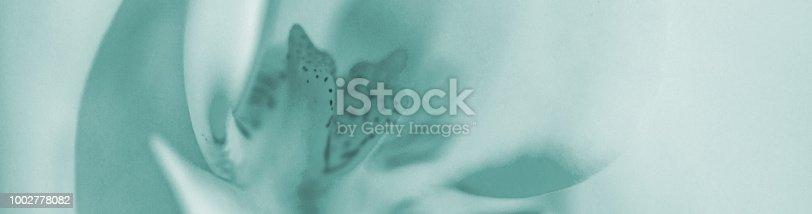 A white orchid with a light background.