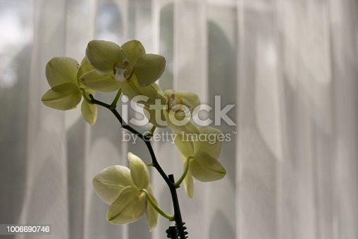 Orchid against white backdrop