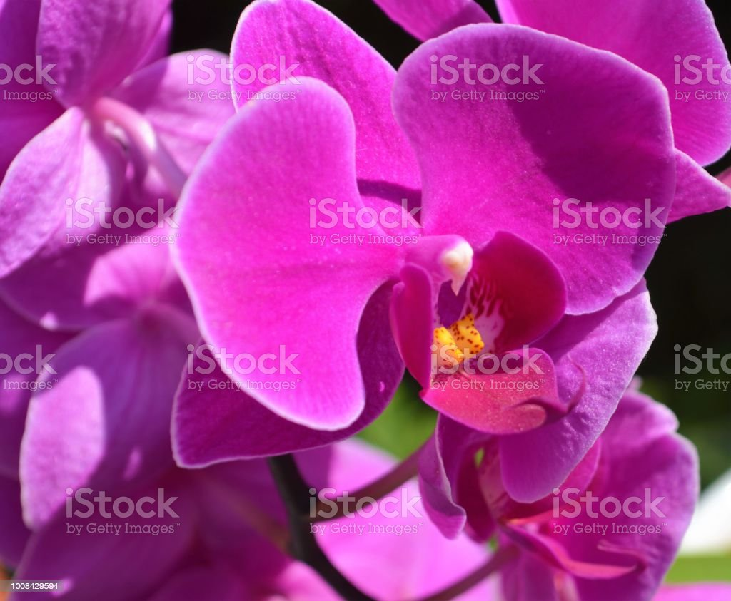 Orchid. – Foto