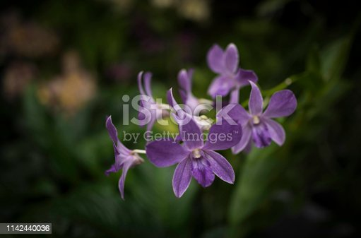 Orchid, Blossom, Bouquet, Flower, Forest