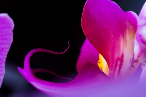 Beautiful orchid with pink, purple, yellow and white colors.