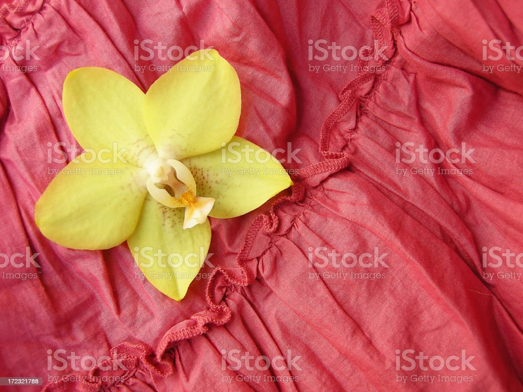 orchid royalty-free stock photo