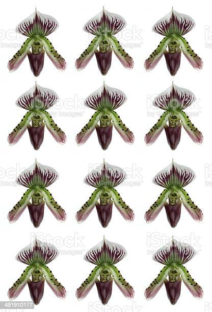 Orchid picture id491910177?b=1&k=6&m=491910177&s=612x612&h=mc8uud1elfytkyxmpkdwg1wlpgtcw2xxaxfab 6ahqs=
