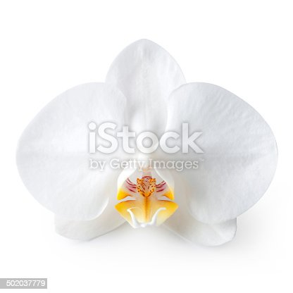 White orchid. Photo with clipping path.