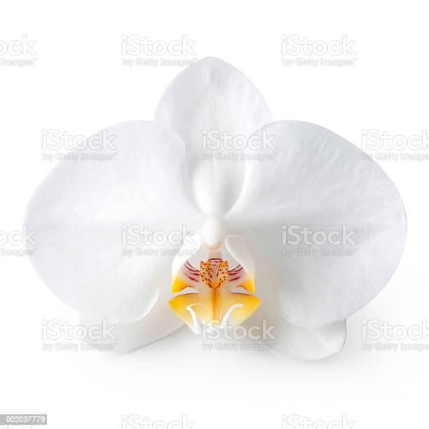 Orchid picture id502037779?b=1&k=6&m=502037779&s=612x612&h=w2j9h3iejg2rxfpaoanjz4y5bfrhgwjse3hhjsrzur4=