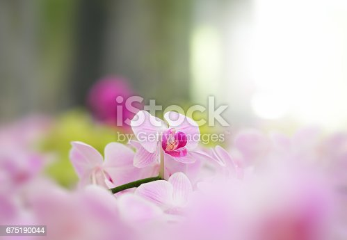 Beautiful orchid flower in Morning sun with natural background, Select the focus and blur.