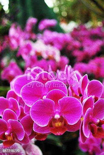Orchid ChiangMai Thailand