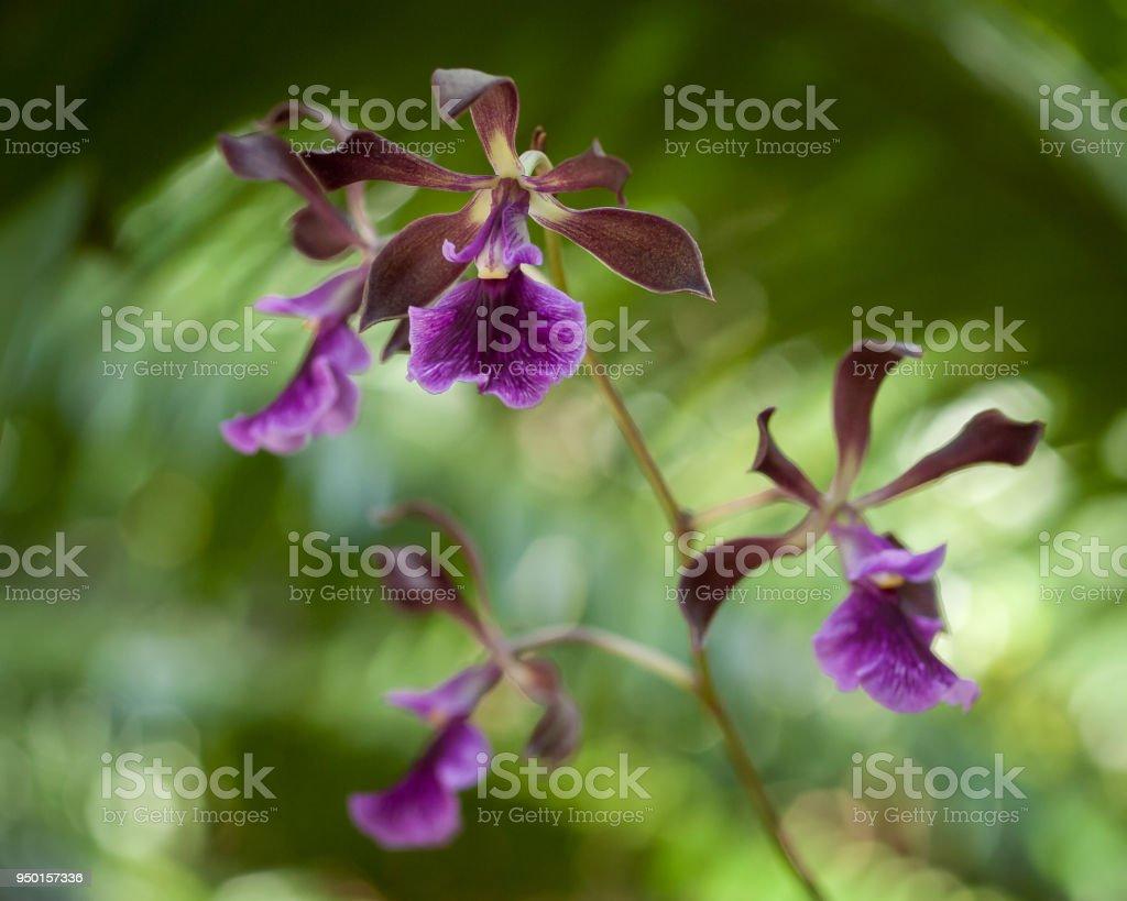 Orchid  - foto de acervo