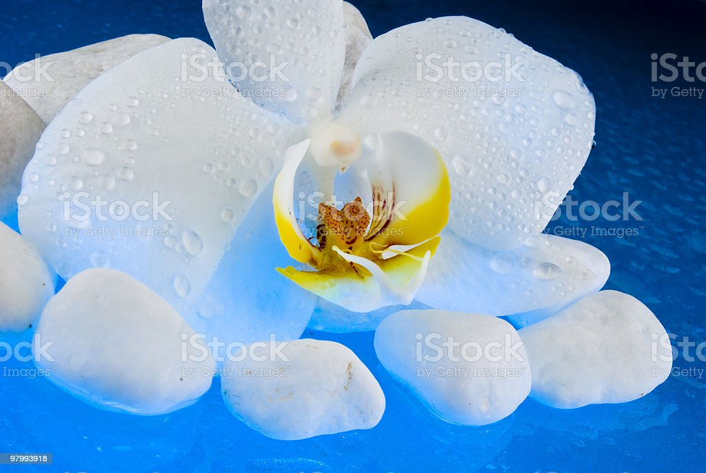 Orchid royalty free stockfoto