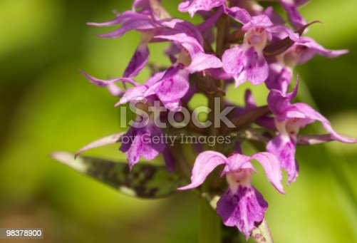 Orchid Stock Photo & More Pictures of Backgrounds