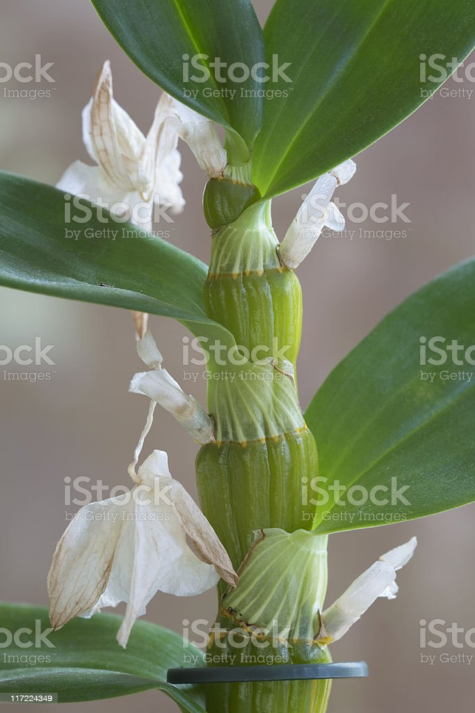 orchid plant royalty-free stock photo