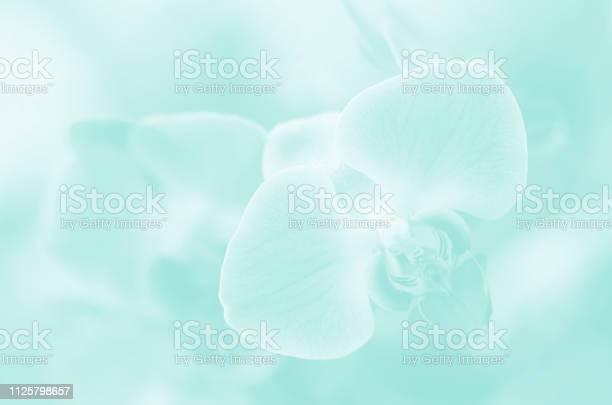 Orchid pretty ethereal pastel teal light blue mint green soft flowers picture id1125798657?b=1&k=6&m=1125798657&s=612x612&h=9ov3yctaianxt5nspewbjm 0mkhbqrdwasbv1q jqnu=