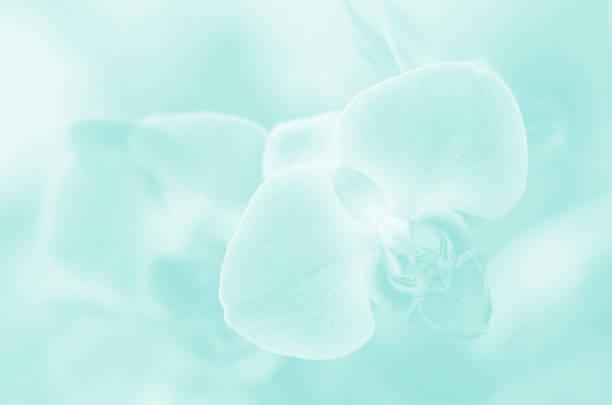 Orchid pretty ethereal pastel teal light blue mint green soft flowers picture id1125798657?b=1&k=6&m=1125798657&s=612x612&w=0&h=5ovvsl5a3hizaxit d2xcg7tk2qq ulohke0yib6aiu=