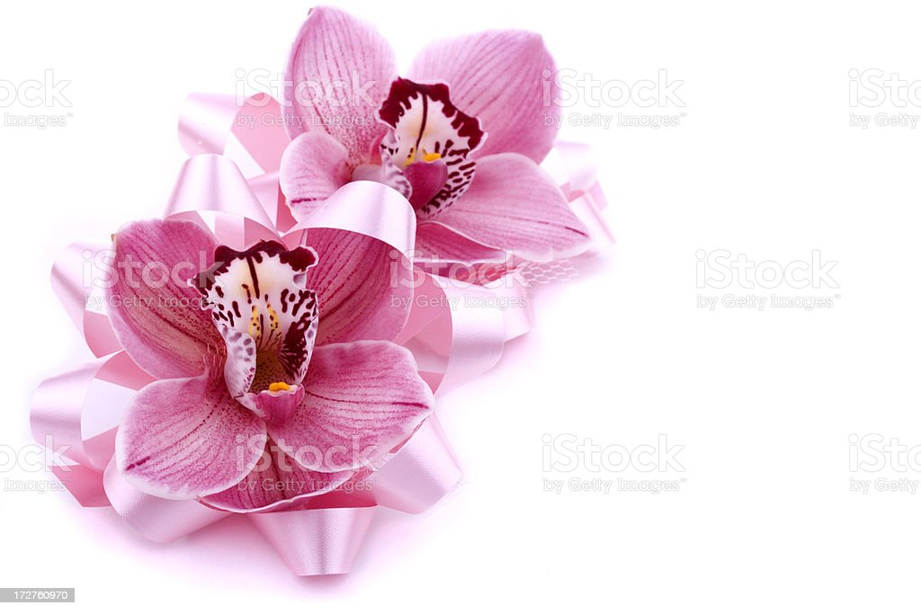 Orchid Series (XXL) royalty-free stock photo