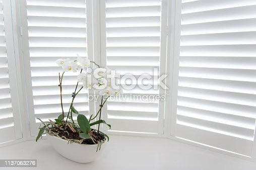 orchid positioned infant of window shutters