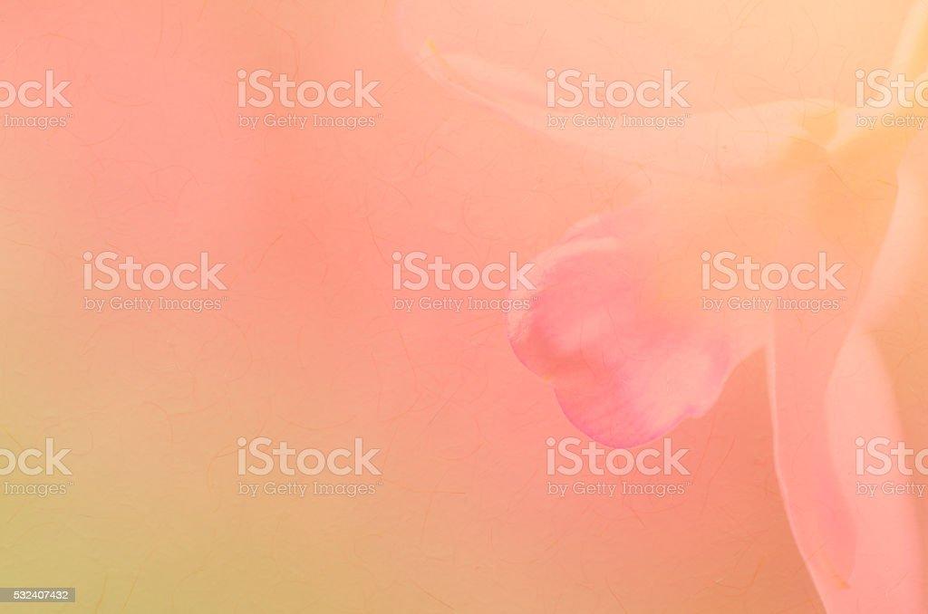 Orchid suave fondo - foto de stock