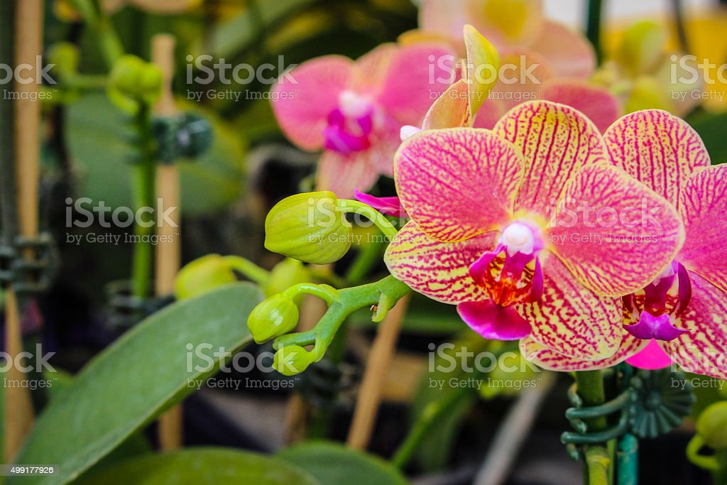 Orchid with Copy Space stock photo
