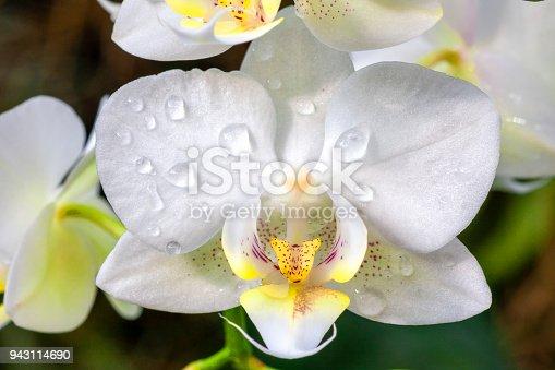 closeup portrait of a orhid flower
