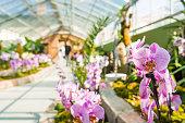 Orchidaceae growing in botanic garden.