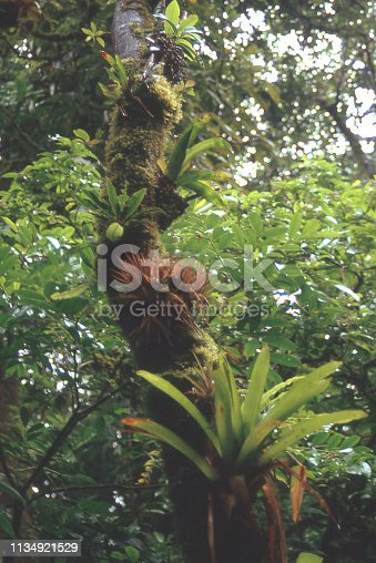 Orchids and other epiphytes in rain-forest and cloud forest Costa Rica